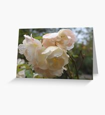 Rain droplets on roses Greeting Card