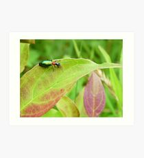 Beautiful Beetle? Art Print