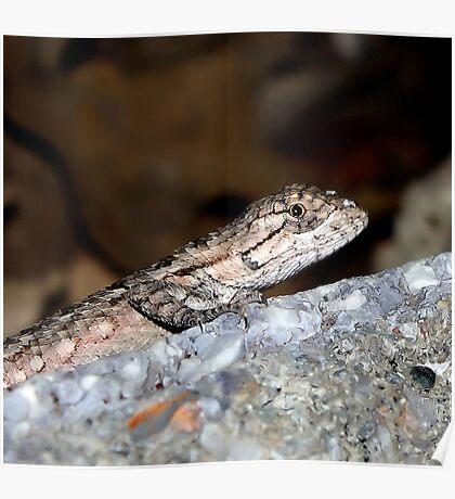 Baby Lizard Poster