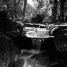 """""""A Stream Runs Through It"""" by Bradley Shawn  Rabon"""