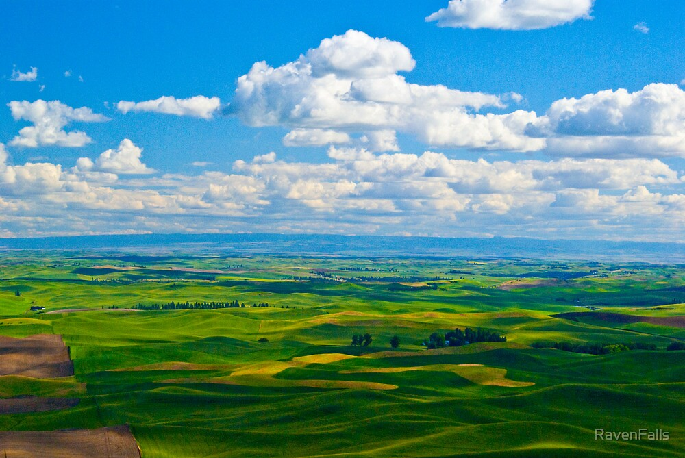 The Palouse from Steptoe Butte by RavenFalls