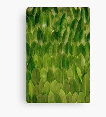 Leaves - Nature Canvas Print