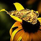 Butterfly 3 by KatsEyePhoto