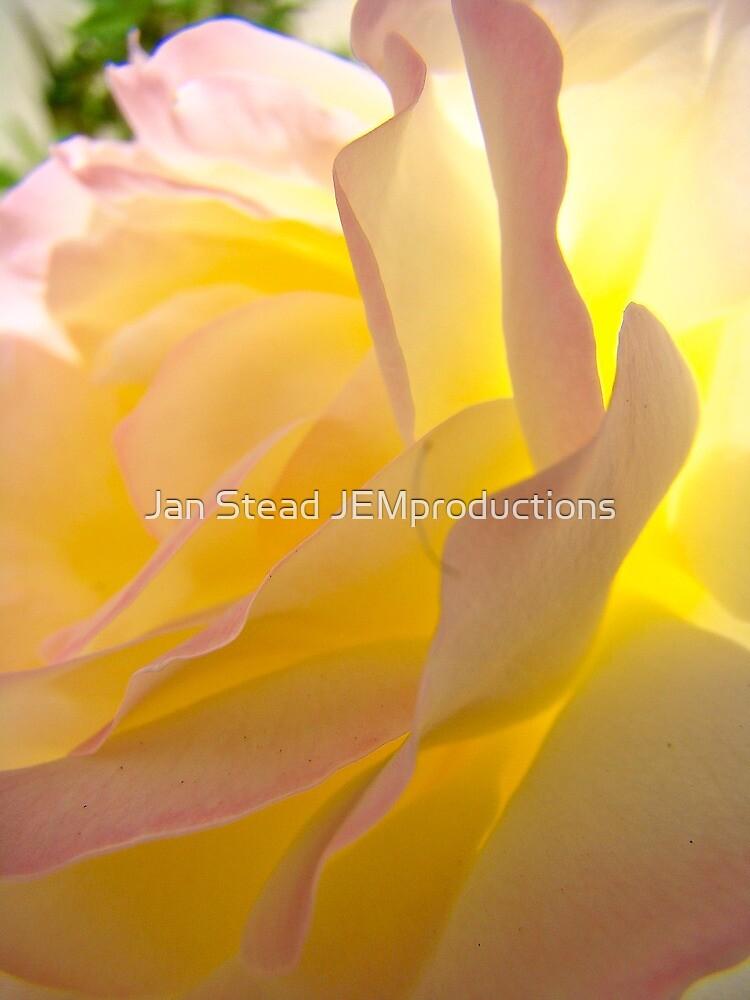 sumptuous beauty by Jan Stead JEMproductions