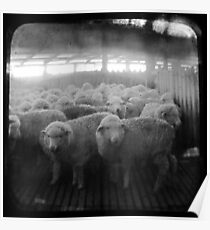 The Holding Pen - TTV Poster