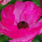 Hot Pink by Lozzar Flowers & Art