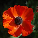 Formal Composure by Lozzar Flowers & Art