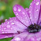 purple rain by Kyoko Beaumont