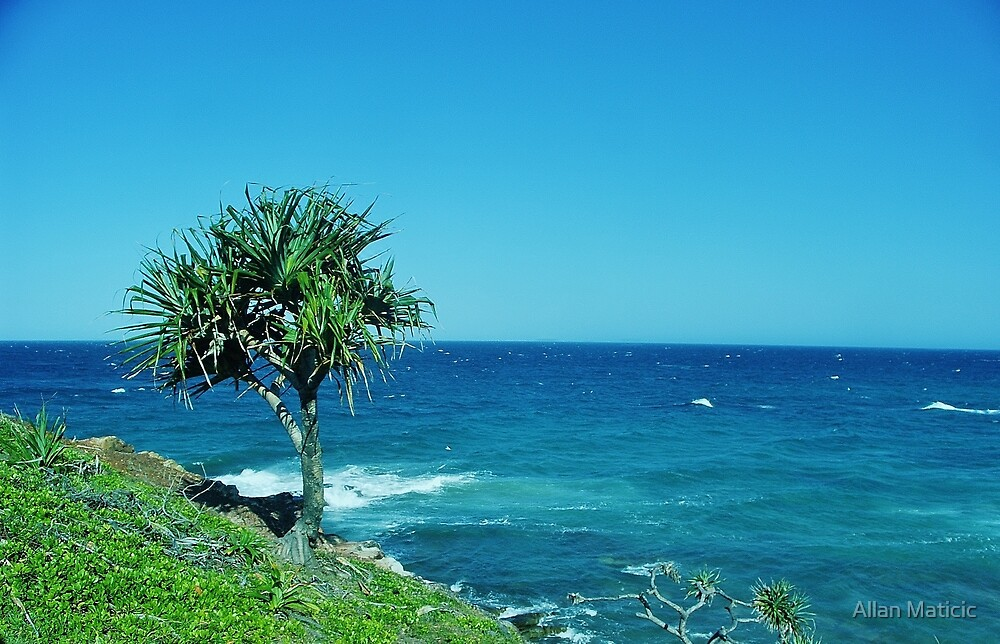 Point Arkwright Pandanus by Allan Maticic