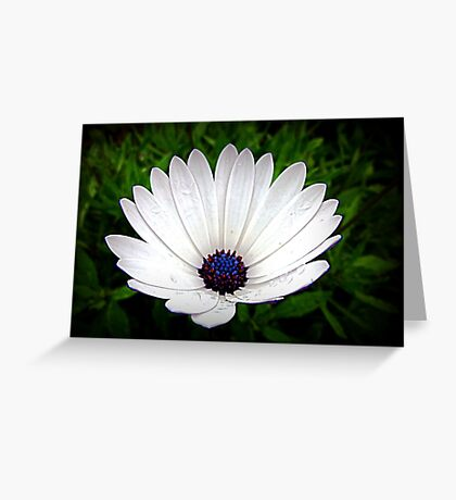 Little White Daisy -   Oct. 2010 Greeting Card