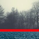 unrelated - seascape and forest conversation by Dirk Wuestenhagen
