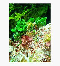 Coral at Rottnest,WA Photographic Print