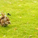 Squirrel by Robert Steadman