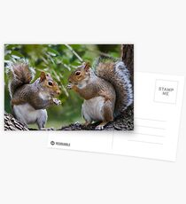 Squirrels Eating Postcards