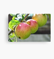 Lienzo Apples On The Tree