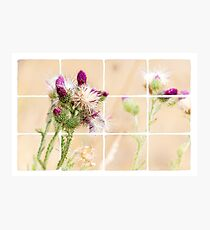 Colourful Thistle Mosaic  Photographic Print