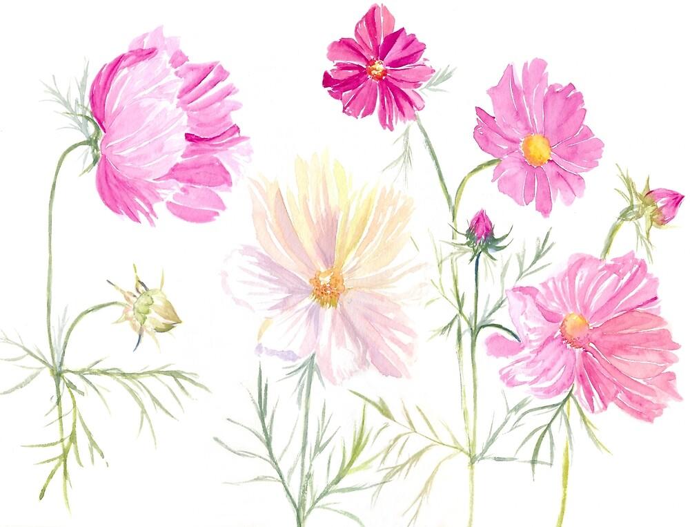 « Fleurs de Cosmos à l'aquarelle » par cindybarillet