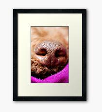 Lámina enmarcada Nariz de perro Lagotto romagnolo macro fondo arte fino en impresiones de alta calidad productos 50,6 Megapixels