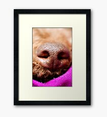 Dog nose Lagotto romagnolo macro background fine art in high quality prints products 50,6 Megapixels Framed Print