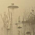 Misty Morning by Sandra Guzman