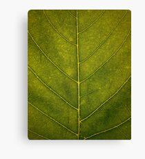 Leaf - HD Nature Canvas Print