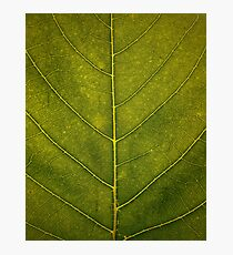 Leaf - HD Nature Photographic Print