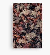 Dried Autumn Leaves - HD Nature Canvas Print