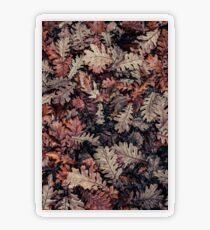 Dried Autumn Leaves - HD Nature Transparent Sticker
