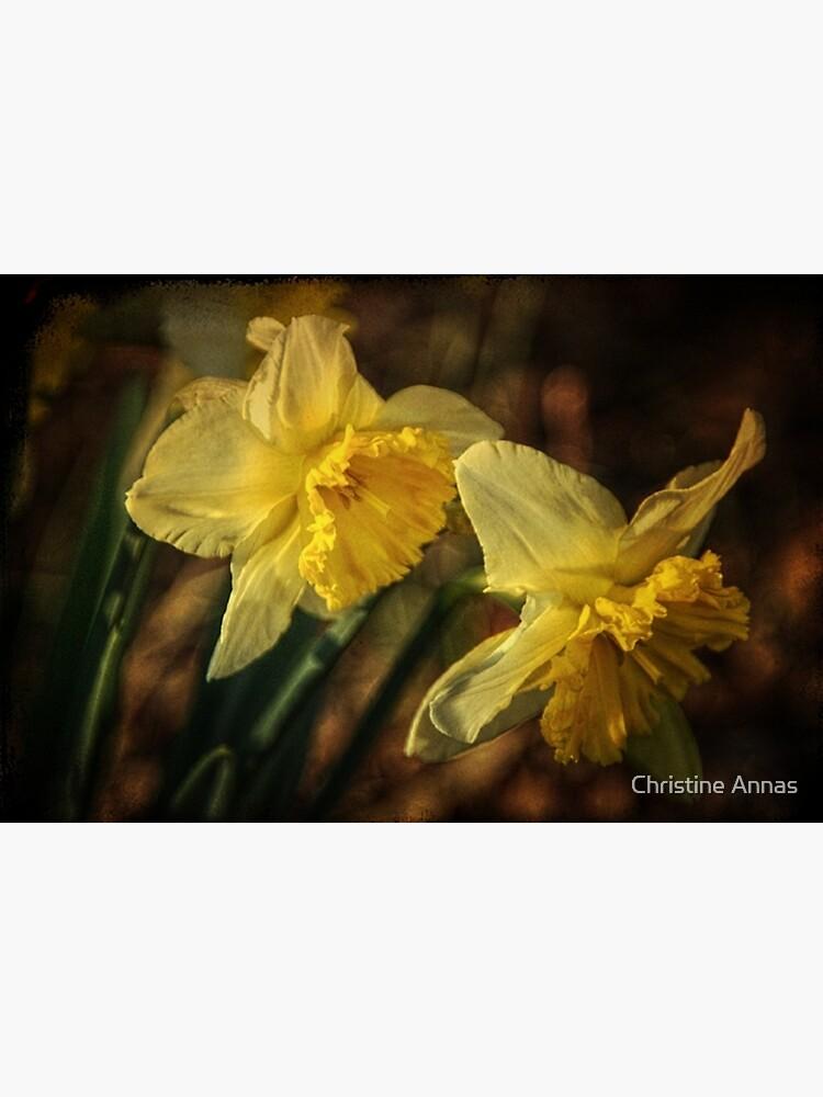 Daffodil Afternoon by 2Bricks