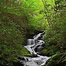 Roaring Fork Falls by Christine Annas