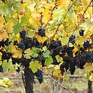 Fruity - Magpie Springs - Adelaide Hills Wine Region - Fleurieu Peninsula by MagpieSprings