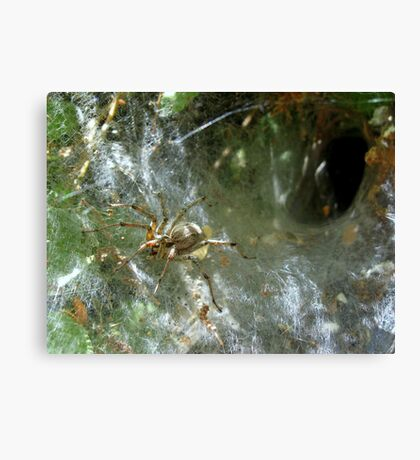 Funnel Web Spider ~2 Canvas Print