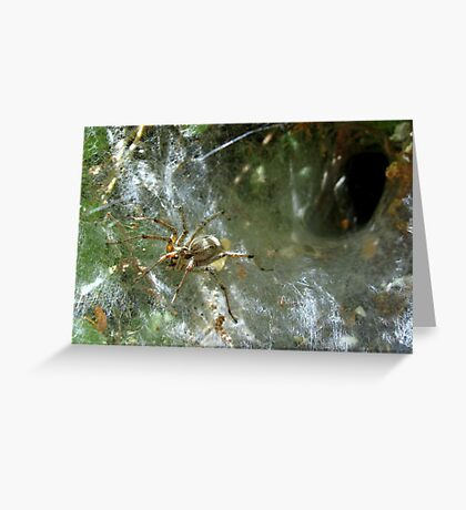 Funnel Web Spider ~2 Greeting Card