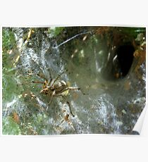 Funnel Web Spider ~2 Poster