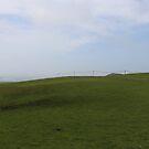 Bodega Bay Lookout - Field of Green Grass by designbycheyney