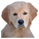 Golden Retriever Puppy by ArtByMichelleT