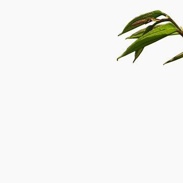 Tranquil Leaves by skeexu