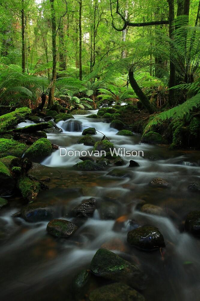 The  Warburton Rainforest Gallery. by Donovan Wilson