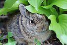 Baby Rabbit by WorldDesign