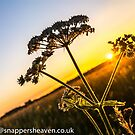 Cowslip at sunset from Meadowflower Collection  by bywhacky