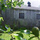 Barn Thru the Pears by Debbie Robbins