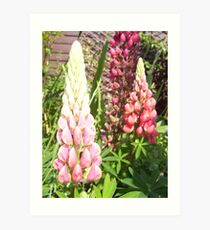 Cottage Garden Lupin Art Print