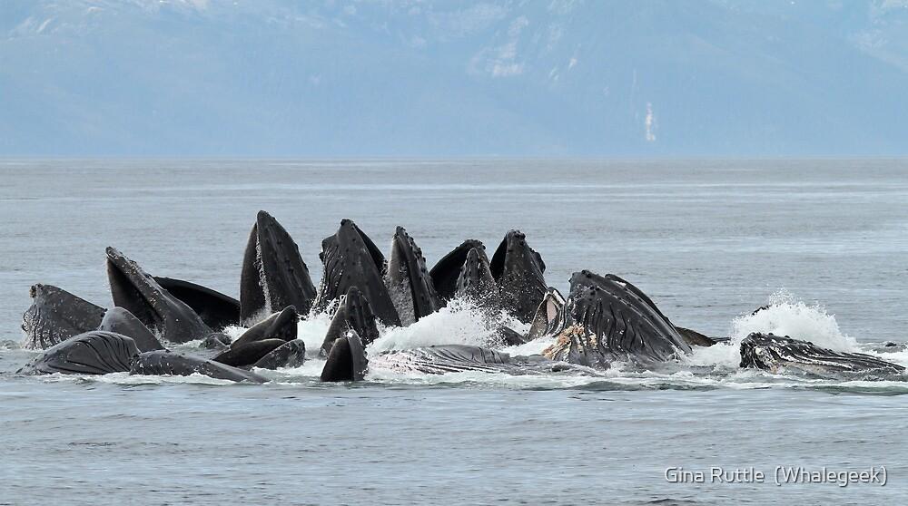 Giant Humpback Maws by Gina Ruttle  (Whalegeek)