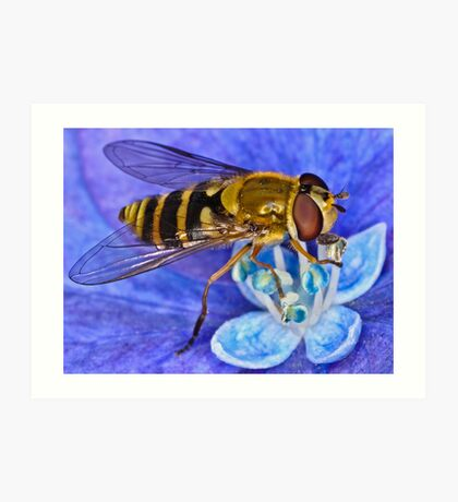 Pollination 7 Art Print
