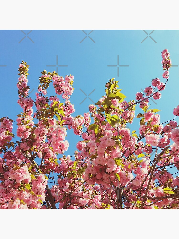 Mothers Day Floral Gift - Cherry Blossoms Photography by OneDayArt