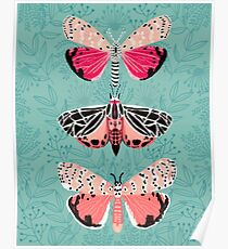 Lepidoptery No. 6 by Andrea Lauren  Poster