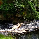Stream In Langden, Forest of Bowland by Sandra Cockayne