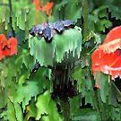 Seed Pod and Rain. by Bo Jones