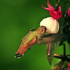 HUMMER by RoseMarie747
