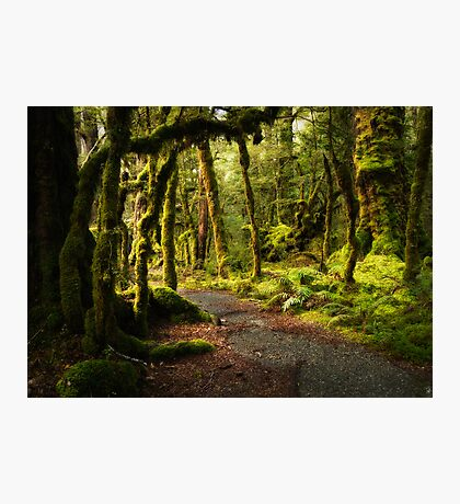 Enchanted Forest - Fiordland National Park Photographic Print